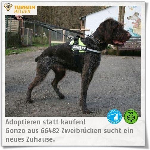 Gonzos Familie hat viele Tränen vergossen, bevor er ins Tierheim Zweibrücken kam.  http://www.tierheimhelden.de/hund/tierheim-zweibruecken/deutsch_drahthaar/gonzo/9441-0/