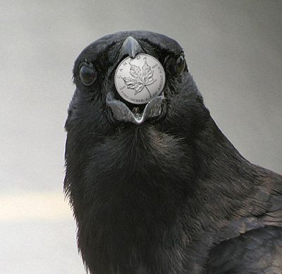 Crows and Coins; uhh, put your money where your mouth is?
