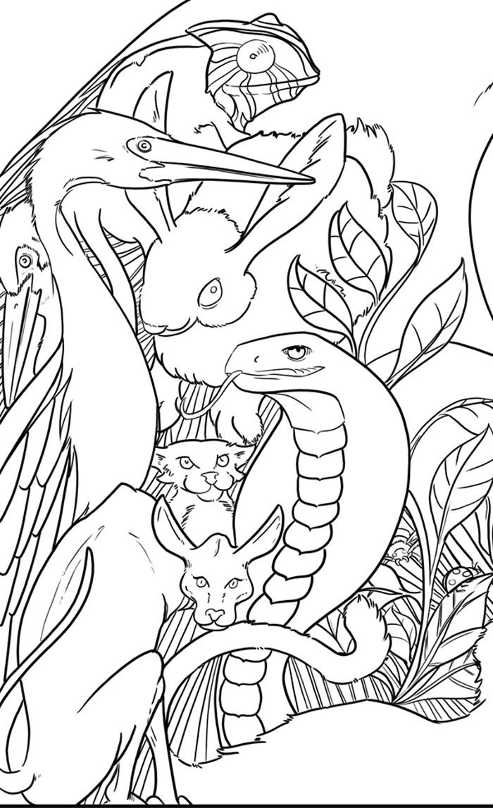 110 best coloring animals images on pinterest coloring books