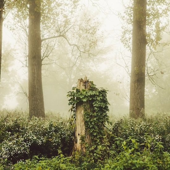 Magic stump #stump #redbubble #hudolin #fall #photography #autumn