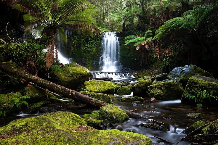 Horseshoe Falls in Tasmania, Australia's Mt.Field National Park