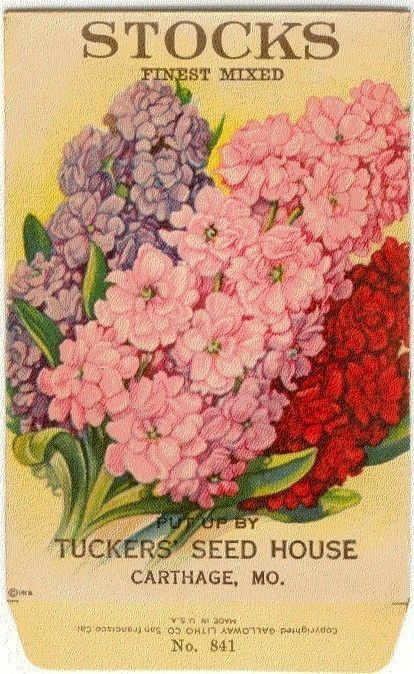 Vintage Flower Seed Packet Tucker's Lithograph STOCKS!! (Carthage, Missouri)