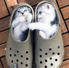 """Kitten in the Right: """"What shoe up to?"""" Kitten on the left: """"Stuck…ain't that a…"""
