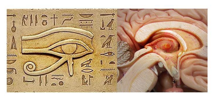 Third Eye - Best kept secret in human history