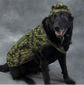 Crochet Giraffe Hat Pattern For Dogs : Hunter Dog Pattern Crochet Ideas Pinterest Hunter ...