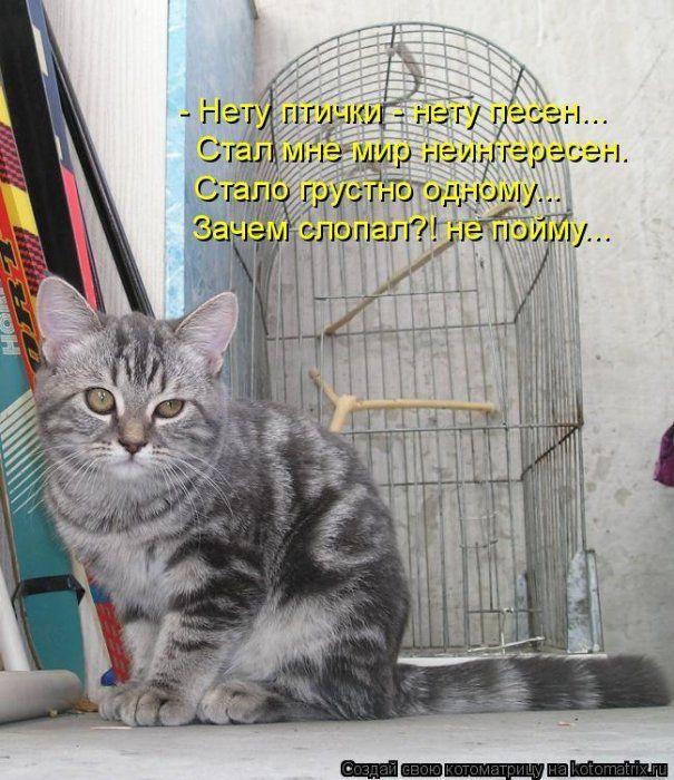 Смешные картинки с надписями до слез котята, открытка