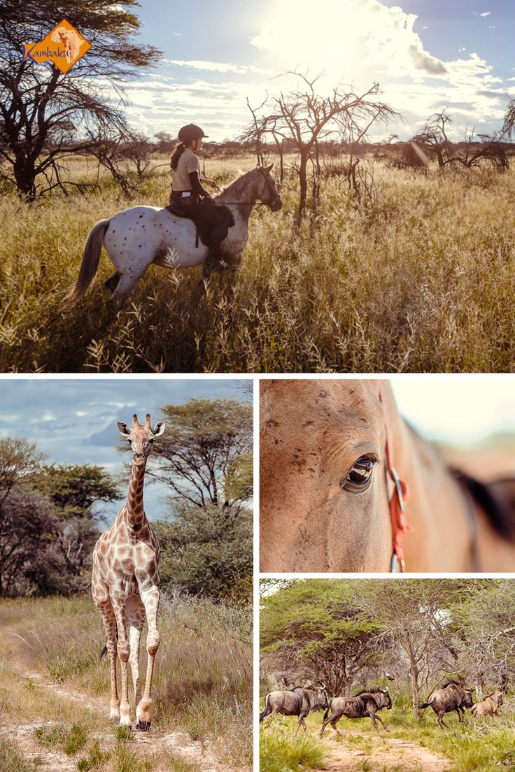 Best horseback safaris in Namibia! Wonderful lodge, top horses, private game reserve in the bush savanna. Find your perfect stay at Kambaku Safari Lodge #horsesafari #safarionhorseback #reitsafaris #horses #kambaku #lodge #namibia #africa #afrika #safari #bestlodge #adventure #savanna #holiday #rider
