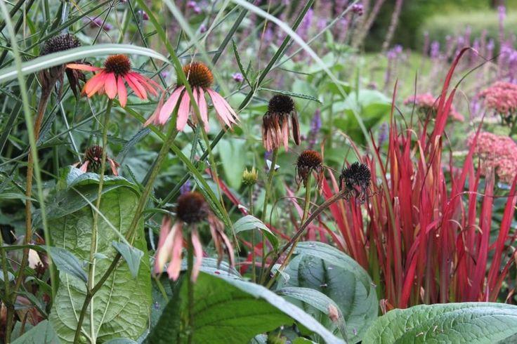 Det är vemodigt men också fantastiskt att se naturens olika faser i Rudbeckian. #flowers #rudbeckia…