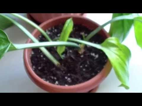 Вяжем голубые пинетки - YouTube
