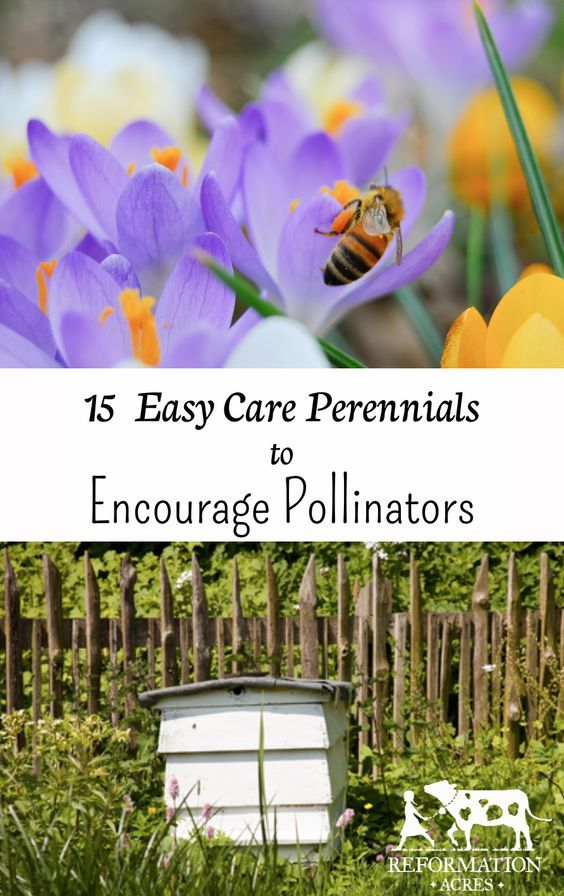 151 best homestead beekeeping images on pinterest bee for Easy care perennial plants
