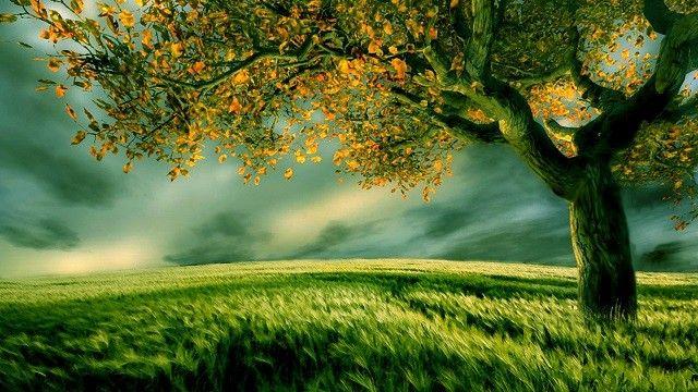 Mikor születtél? Megmutatjuk, milyen fa vagy, és milyen tulajdonságok jellemeznek!