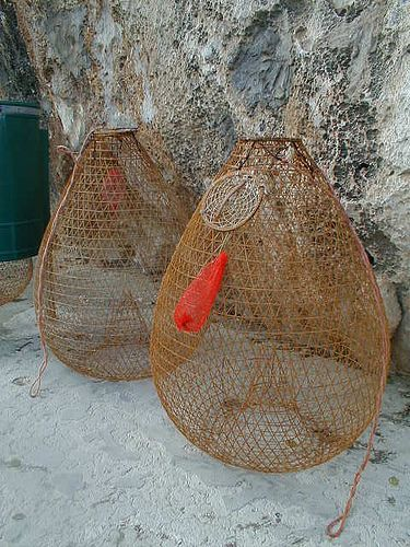 fishing baskets...craftsmanship meets ingenuity. Fish enter the basket easily, but have a difficult time escaping due to the funnel-like entry that is allows a wider passage from the outside.