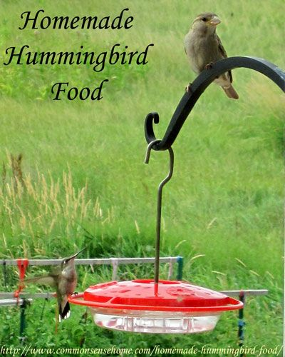 Homemade Hummingbird Food and My Favorite Nectar Feeder @ Common Sense Homesteading