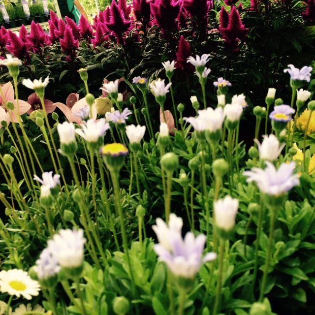 Květinové šílenství v Hornbachu #4