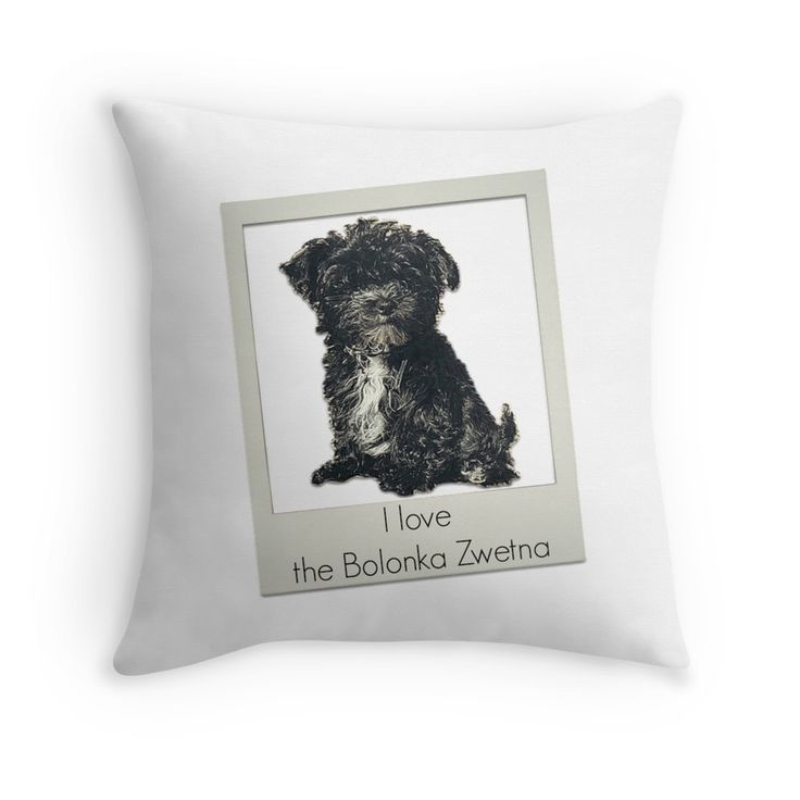 Bolonka Zwetna love pad. This little dog on the cushion can be ordered at: https://www.redbubble.com/people/bbrigitte/works/23525092-i-love-the-bolonka-zwetna?p=throw-pillow&ref=artist_shop_grid