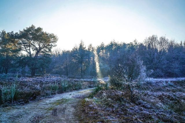 Annerieke: 8 FOTOGRAFIE TIPS VOOR DE WINTER
