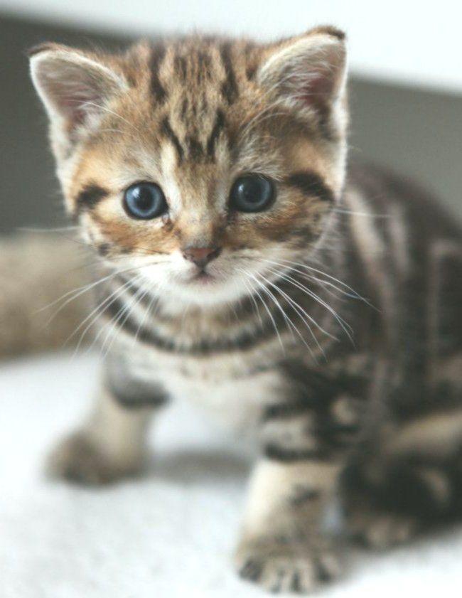 Susse Katze 37 Bilder Tiere Babytiere Niedliche Tiere