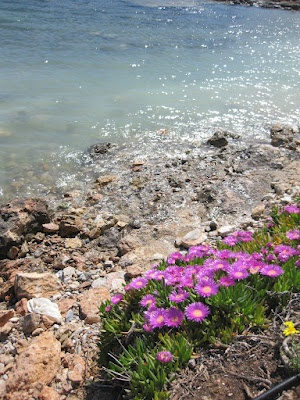 17 best images about wildflowers of greece on pinterest for Small east coast beach towns