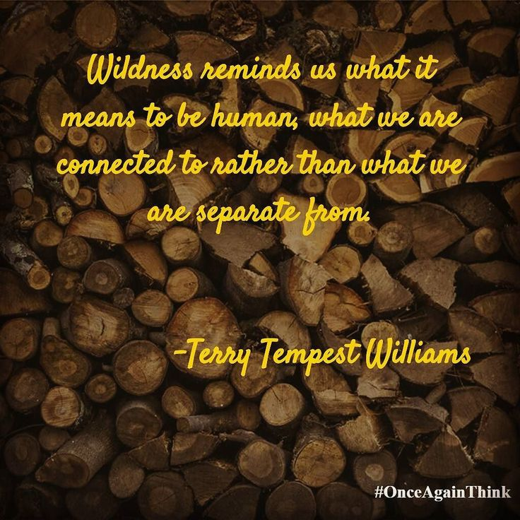 Wildness reminds us what it means to be human what we are connected to rather than what we are separate from. #TerryTempestWilliams  #quote #success #happiness #quoteoftheday #motivated #inspiration #startups #entrepreneur #life #keepgoing #fff #l4l #love #like #image #life #quotes #Tuesday #tbt #wcw #instagood #instalike #motivate