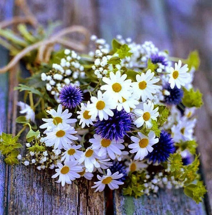 жалоб стала с днем рождения картинки полевые цветы свой