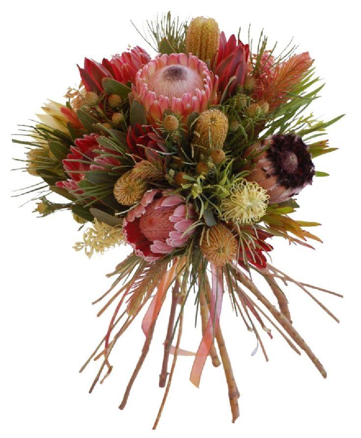 Protea, Banksia, Grevillea Flowers, Leucadendron and Australian Pine #CaGrown #Protea