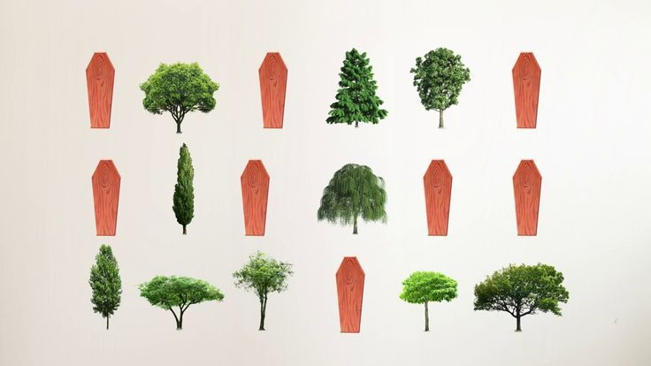 Trees and no coffin! Plant a tree and save the Earth! #greenburial #trees #funeral #biourn