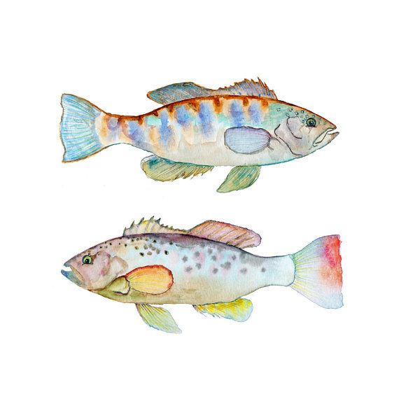Watercolor Fish Print.  Colorful Fish Wall Art.