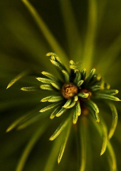 ~✿ڿڰۣ Olive Green