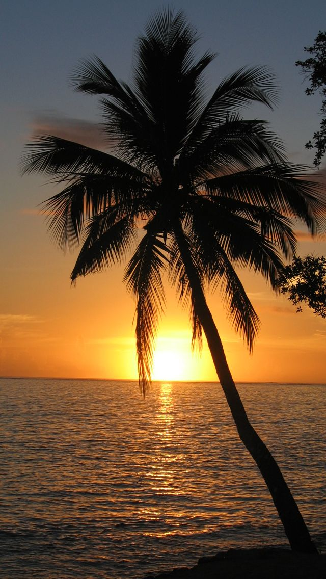 palm tree iphone wallpaper | iPhone 5 Sunset Palm Tree ...