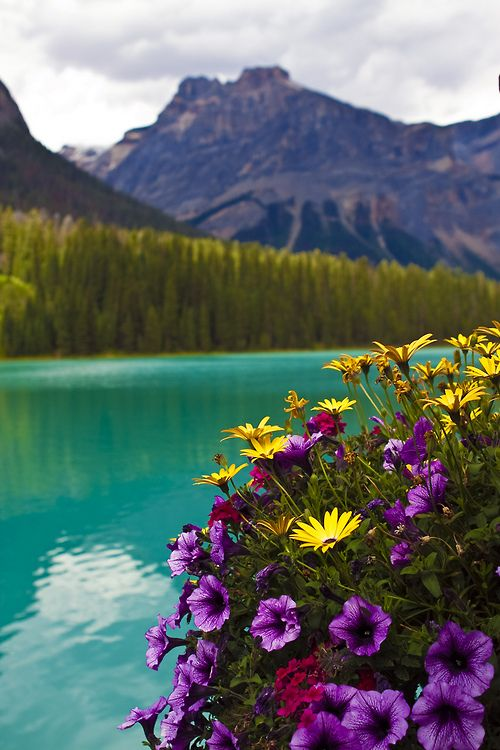 Emerald Lake Flowers   Canada