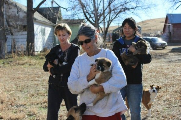 Rez Dog Rescue Ranch  on GoFundMe - $0 raised by 0 people in 1 hour.