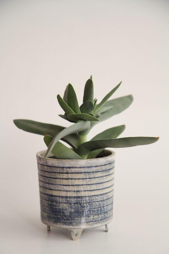 [plant]