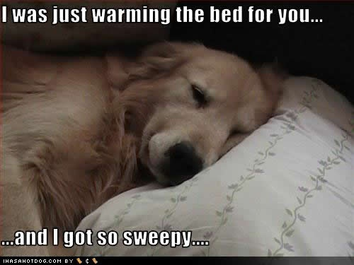 I know the feeling well dog friend.