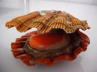 .:: Moluscos - a concha protege o animal de predação e dissecação.
