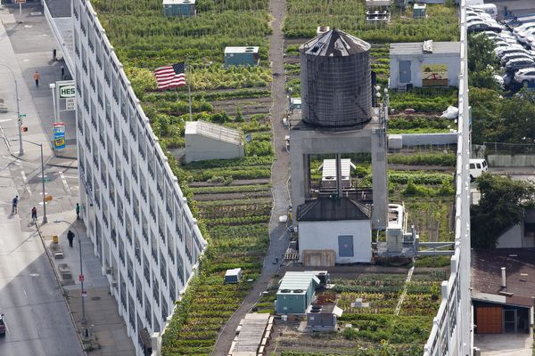 The Brooklyn Grange is a one-acre urban farm in Queens. In addition to providing a surprising food source, urban rooftop farms offer a significant cooling effect on the nearby area.