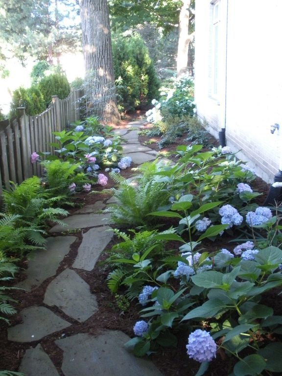Traditional Landscape/Yard with Delray Plants 8-3/4 in. Macho Fern in Pot, Fence, Natural stone pathway, Hydrangeas Care