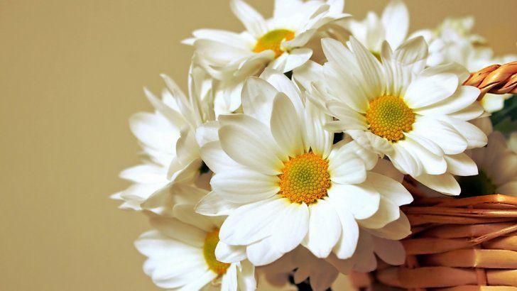 Flores Grandes Blancas En La Cesta