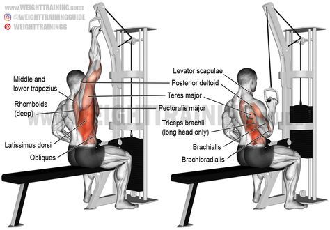 One arm lat pulldown. A unilateral compound exercise. Target muscle: Latissimus Dorsi. Synergists: Brachialis, Brachioradialis, Teres Major, Posterior Deltoid, Rhomboids, Levator Scapulae, Middle and Lower Trapezius, Lower Pectoralis Major, Pectoralis Minor, Obliques, Psoas Major, Quadratus Lumborum, Iliocastalis Lumborum, and Iliocastalis Thoracis. Dynamic stabilizers: Biceps Brachii and Triceps Brachii (long head only).