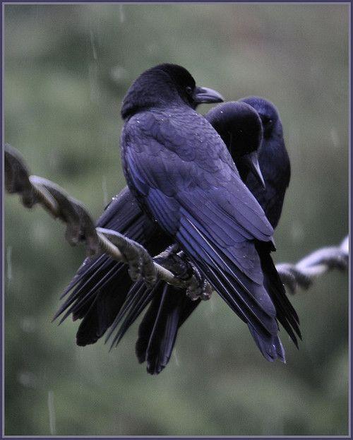Les 116 meilleures images propos de crows sur pinterest for Miroir divergent