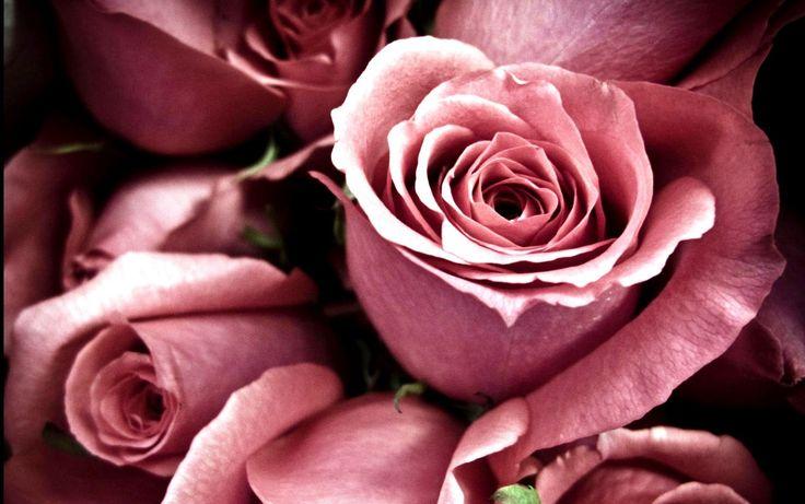 Flowers Wallpapers For Desktop Full Size Hd Rose Wallpapers For Desktop Full Size Hq Images 12 Hd