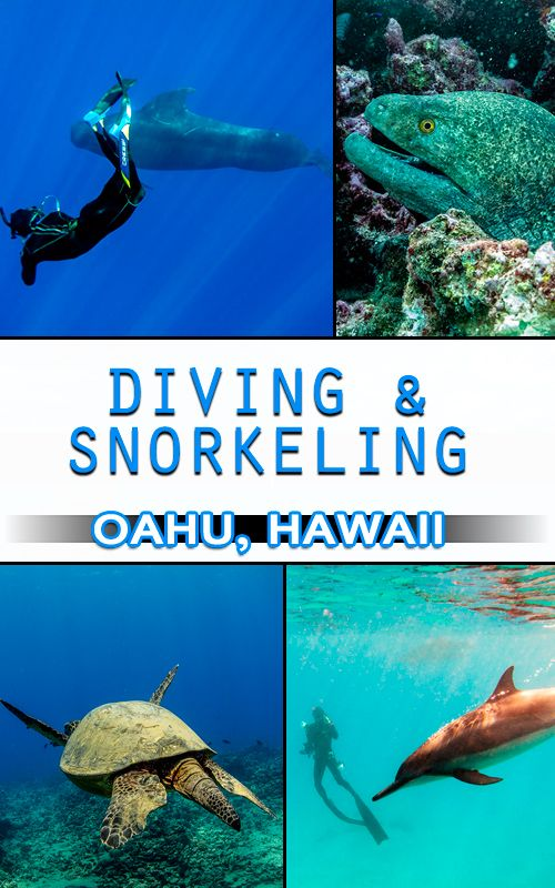 Oahu, Hawaii offers amazing opportunities to experience unforgettable water adventures. Snorkel and swim with dolphins, turtles and sharks! Scuba diving World War 2 era plane wrecks and more.