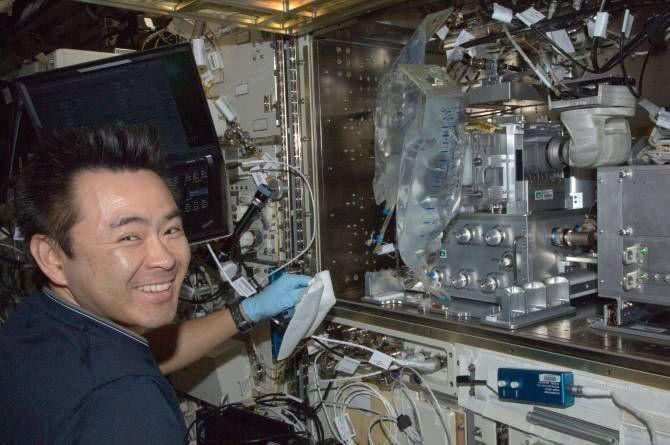 El astronauta Akihiko Hoshide, de la agencia espacial JAXA, en el Hábitat Acuático del módulo Kibo de la Estación Espacial Internacional, donde se criaron peces Medaka para el experimento sobre la pérdida de densidad ósea en el espacio. (Foto: NASA)