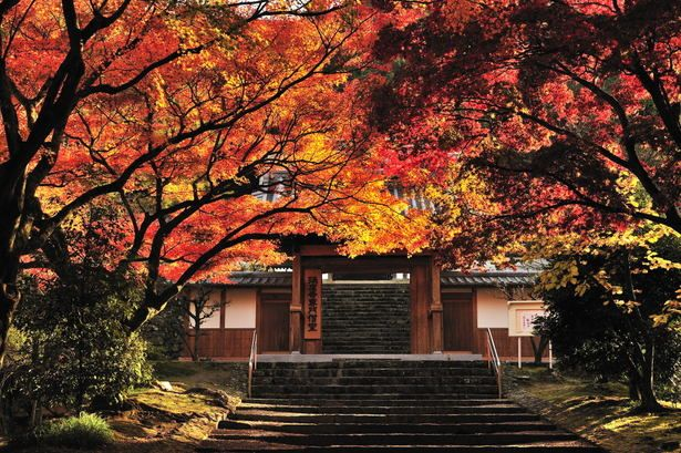紅葉燃ゆる寺院 | 街並み・建物 > 神社・寺・教会の写真 | GANREF