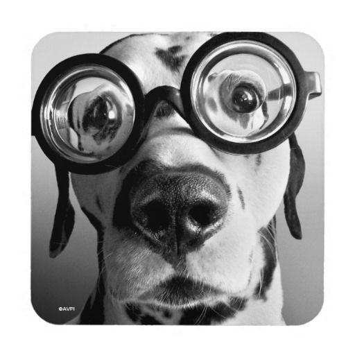 Avanti Press - Funny Dalmatian Dog Wears Thick Glasses. Regalo, gift. #posavaso #coaster