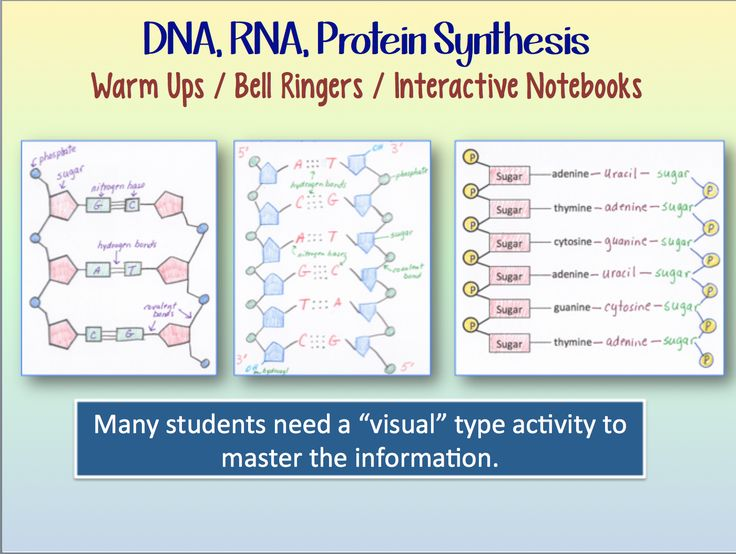 1000+ images about Biology - DNA/Protein Synthesis on ...