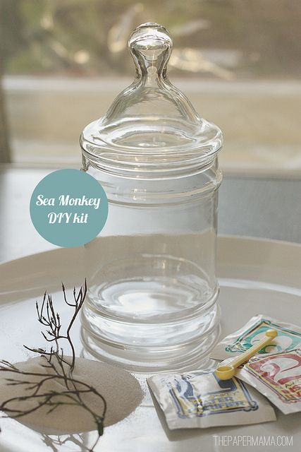 DIY Sea Monkey Kit tutorial by The Paper Mama. More fun info here: http://thepapermama.com/2012/05/diy-sea-monkey-kit.html