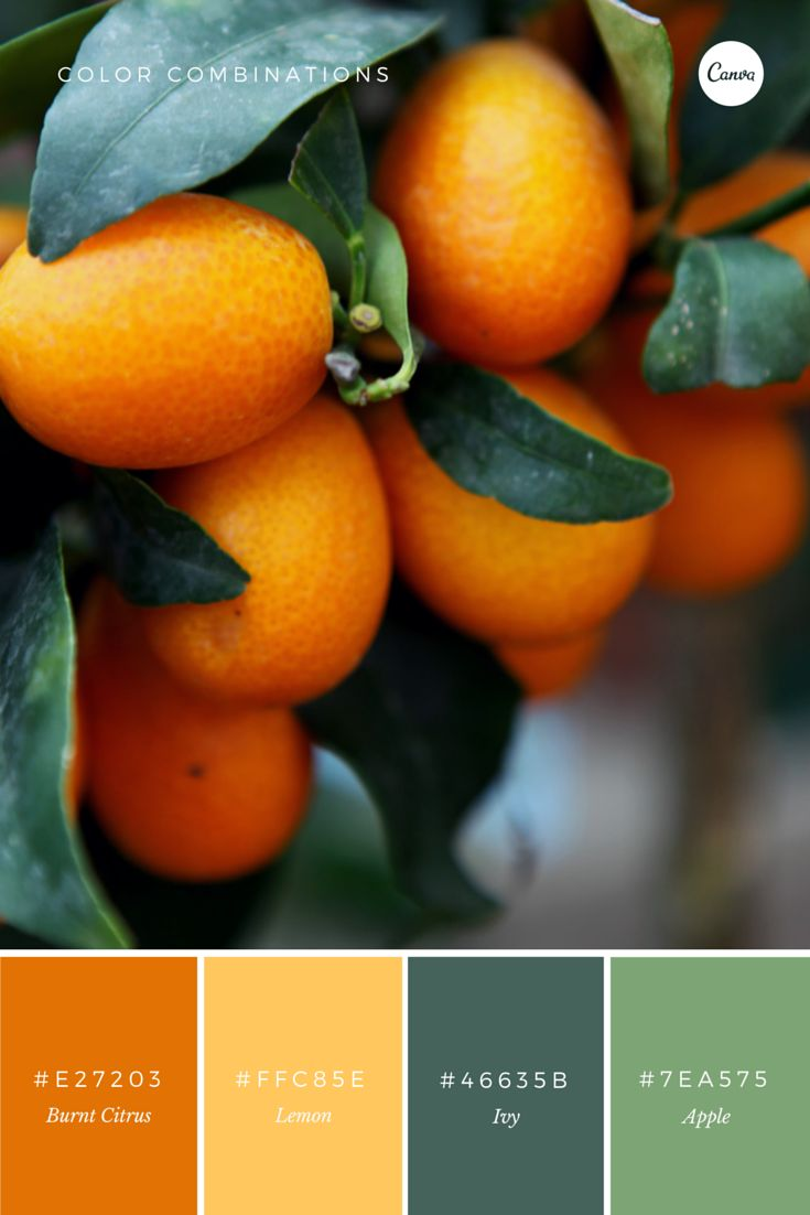 The Citrus Collection. A juicy combination to try out in your next design. 1: E27203 2: FFC85E 3: 46635B 4: 7EA575 #color #inspiration #graphicdesign