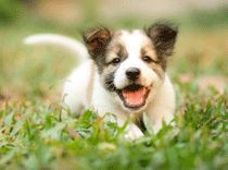 Why chemicals are bad for pets and how to reduce their exposure - Wellbeing Magazine   WellBeing.com.au