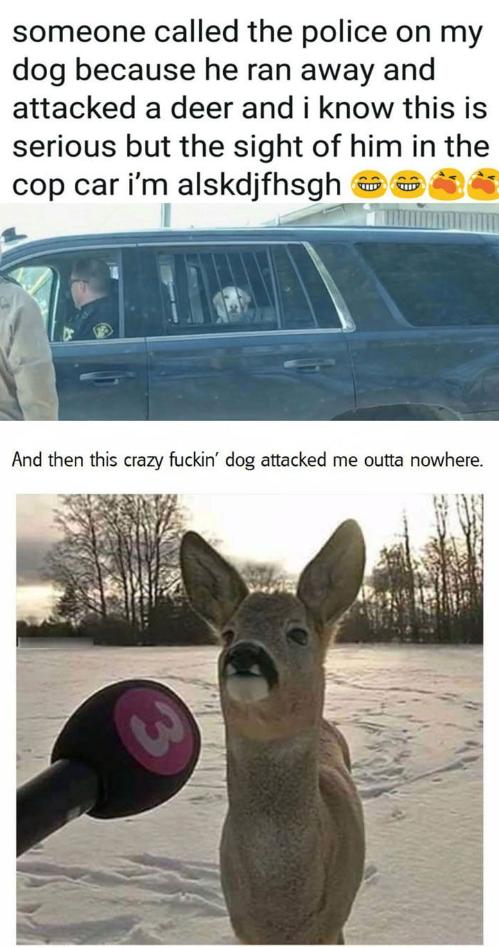 28 Really Funny Animal Memes Pictures That Will Make You LOL