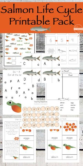 25 best salmon fun images on pinterest teaching ideas funny science and learning resources. Black Bedroom Furniture Sets. Home Design Ideas